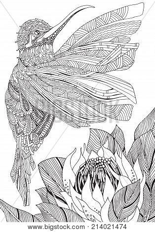 Sunbird. Artistic Bird And Protea Flower