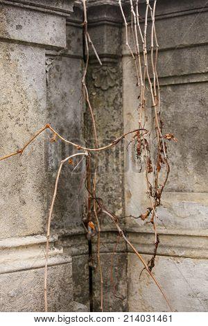 Old Jewish Cemetery Image Photo Free Trial Bigstock