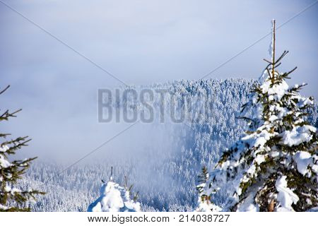 View to the forest covered in mist from the mountain Jahorina in Bosnia and Herzegovina