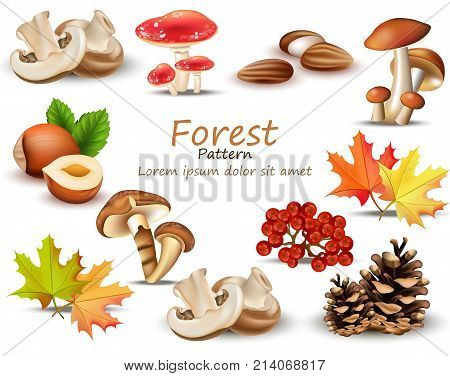 Forest theme set with mushrooms, nuts, leaves, pinecone Vector illustration
