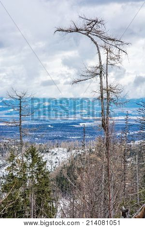 Spruce forest after natural disaster in High Tatras mountains Slovak republic. Winter natural scene.