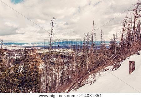Spruce forest after natural disaster in High Tatras mountains Slovakia. Winter natural scene. Red photo filter.