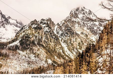Spruce forest after natural disaster and snowy peaks in High Tatras mountains Slovakia. Winter natural scene. Yellow photo filter.