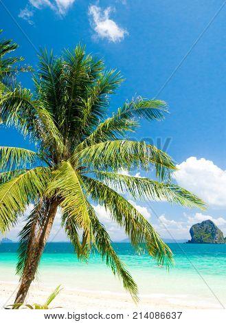 Coconut Coast Green Getaway