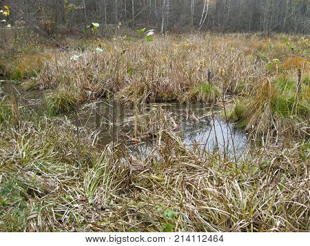 Wet lake in the autumn forest.