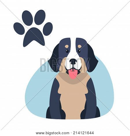 Heavy bernese mountain dog flat design on white background. Vector illustration of swiss highland and shepherd dogs. Blue paw print in upper corner of drawing image. Big hound shows pink tongue