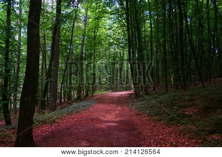 Pathway between the forest. Here you cand admire and endless way in the nature.