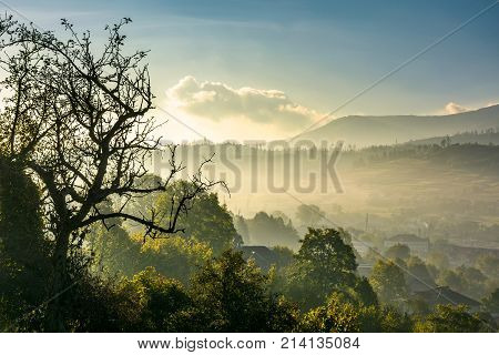 Tree Above The Green Rural Valley In The Morning