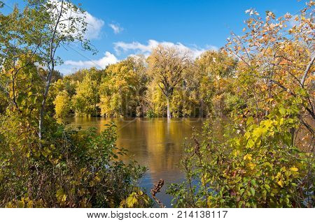 vibrant autumn foliage of forest within minnesota valley national wildlife refuge along banks of minnesota river in eagan minnesota