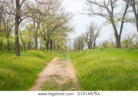 dirt road to the sea through the spring Park