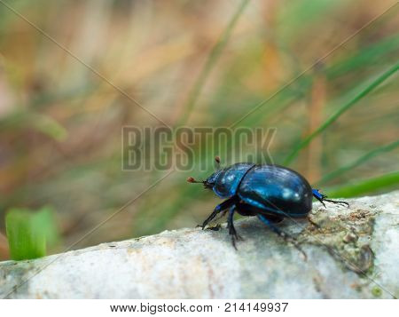 black beetle on the trunk of a fallen tree in the forest