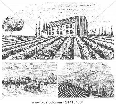vineyards landscape, tuscany fields, old looking scratchboard or tattoo style for menus and signage in the bar. engraved hand drawn in old sketch, vintage style for label or T-shirt