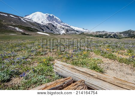 Meadow Of Wild Flowers Below Mount Rainier