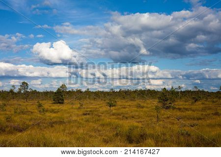 Summer grass field on swamp with amazing cloudscape in Nigula nature reserve Estonia
