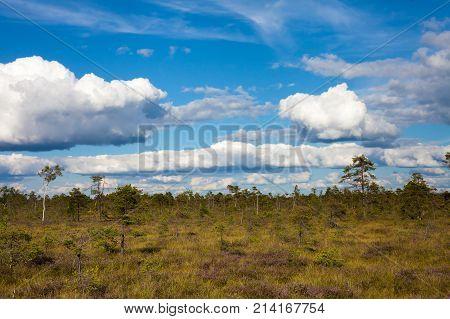 Amazing Summer Landscape Of Swamp