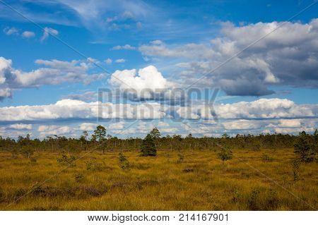 Vast Beautiful Grass Field
