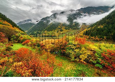 Fantastic View Of Mountains In Fog And Colorful Fall Forest