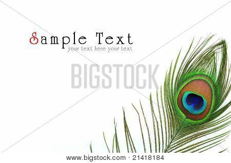 Detalle del ojo de pluma de pavo real