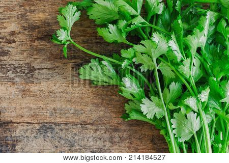 Green leaves coriander lay on wood table in top view with copy space. Food preparation concept for fresh vegetable. Fresh coriander or cilantro on rustic wood plank ready for cooking. Coriander is popular vegetable for asian food.
