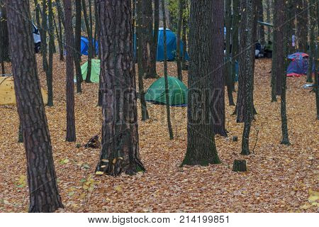 Camping area with multi-colored tents in forest. Autumn