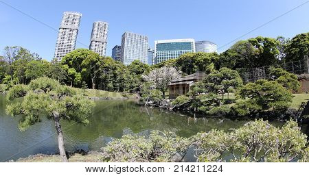 Tokyo, Japan -April 20, 2017: Hamarikyu Gardens, Sumida River, Chuo district, Japan. Oriental japanese garden during Hanami. The Hama Rikyu is in contrast to the skyscrapers.