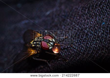 A house fly close-up portrait in the wild macro