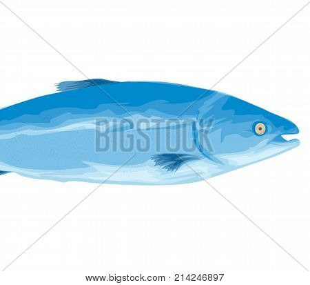 Freshwater. Perch Vector Art Graphic. Fish. Cartoon style