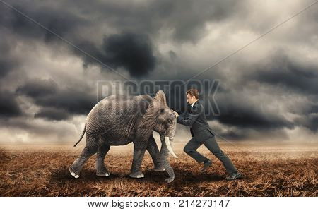 Businessman pushing with an elephant on a field.