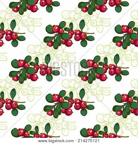 Seamless pattern made from hand drawn cowberry on white background. Vector illustration