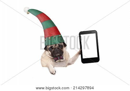 Christmas pug puppy dog with red and green elf hat holding up blank tablet or mobile phone hanging on white banner isolated