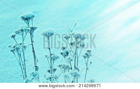 Winter landscape.Winter christmas frozenned beauty scene.frozen flower