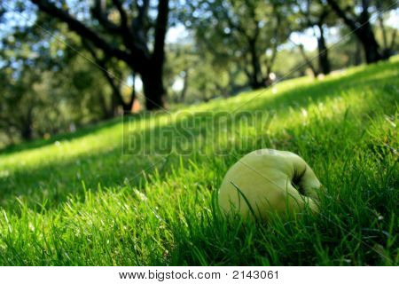 Tasty Green Apple In The Grass