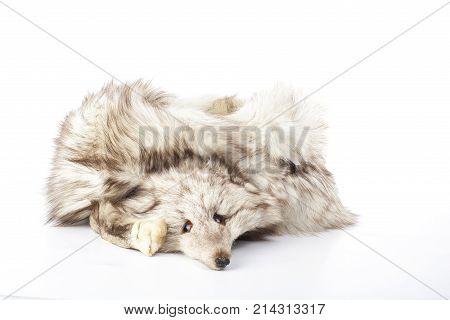 Silver fox fur boa. Stop killing animals. Silver fox. Dead silver fox fur. Sad fox. Sad fox face. Fur.