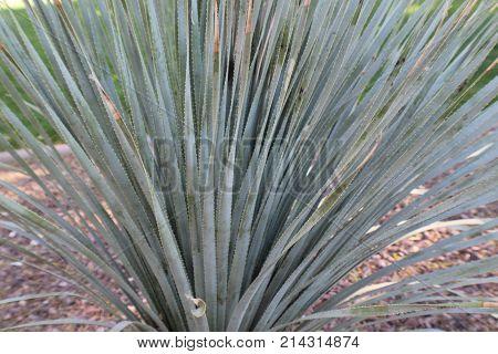 Cactus large green spikiness close up decorative