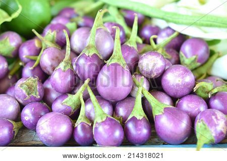 Thai purple eggplant,concept for vegetables with medicinal properties.Such as expect,or Relieve Fever Parasitic worms,Sexual stimulation.Picture for Pharmaceutical Organization,clinic,herbal website.