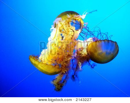 3 Jellyfish Floating Underwater