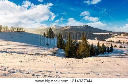 Spruce Trees On Snowy Hillsides At Sunrise