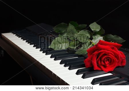 Red rose on the keys of the electronic synthesizer on a black background