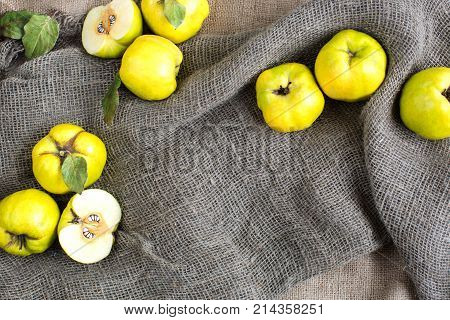 fall, healthy lifestyle, presents concept. fresh fruit crops consisted of sunny yellow quinces with green sides, they are lying in the folds of rough fabric of sack