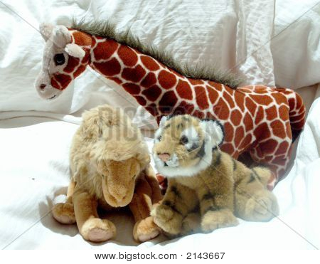 Giraffe, Camel And Tiger