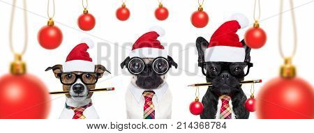 Dogs On Christmas Holidays