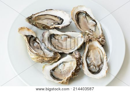 Oysters. Raw fresh oysters are on white round plate, image isolated, with soft focus. Restaurant delicacy.