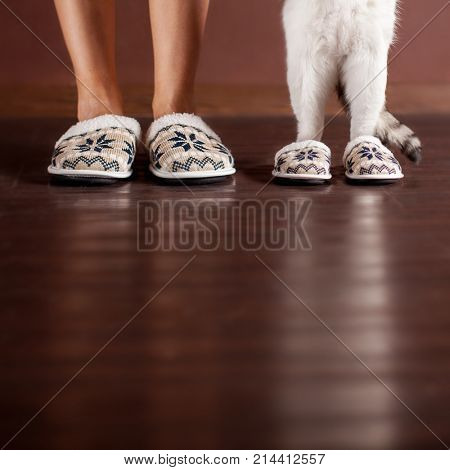 Woman and a cat in slippers. Family at home. Domestic life with pet
