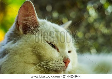 Cat Happy