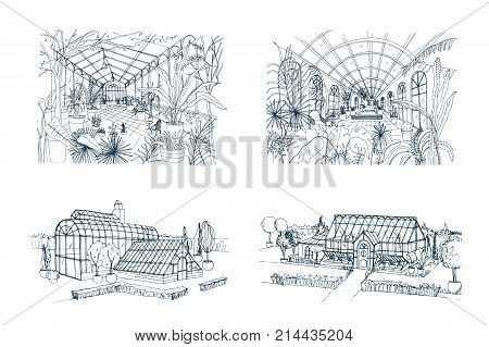Bundle of freehand drawings of greenhouses full of jungle plants. Set of sketches of glasshouses with palm exotic trees growing in pots. Interior and exterior views. Monochrome vector illustration