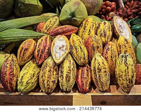 Closeup Group of Colorful Cocoa Fruits with Sliced