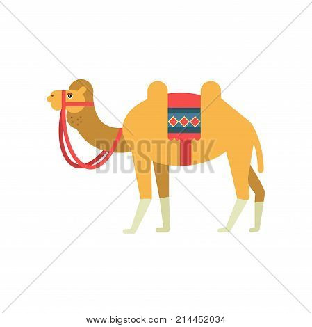 Camel whit saddle and cover on the back, two humped desert animal, symbol of traditional Egyptian culture vector Illustration on a white background