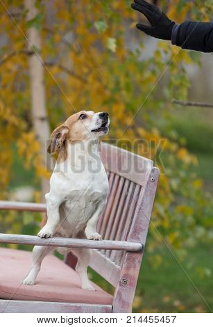 Dog Listening Commands On Bench