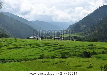 lush green rice fields in Spring nestled between Himalayan mountains in Bhutan with billowing white clouds landscape