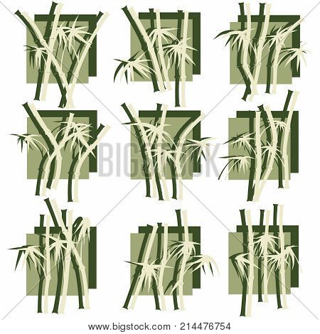 Set of square logo bamboo trees and its shadow in green tone.